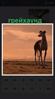 655 слов стоит собака породы грейхаунд 7 уровень