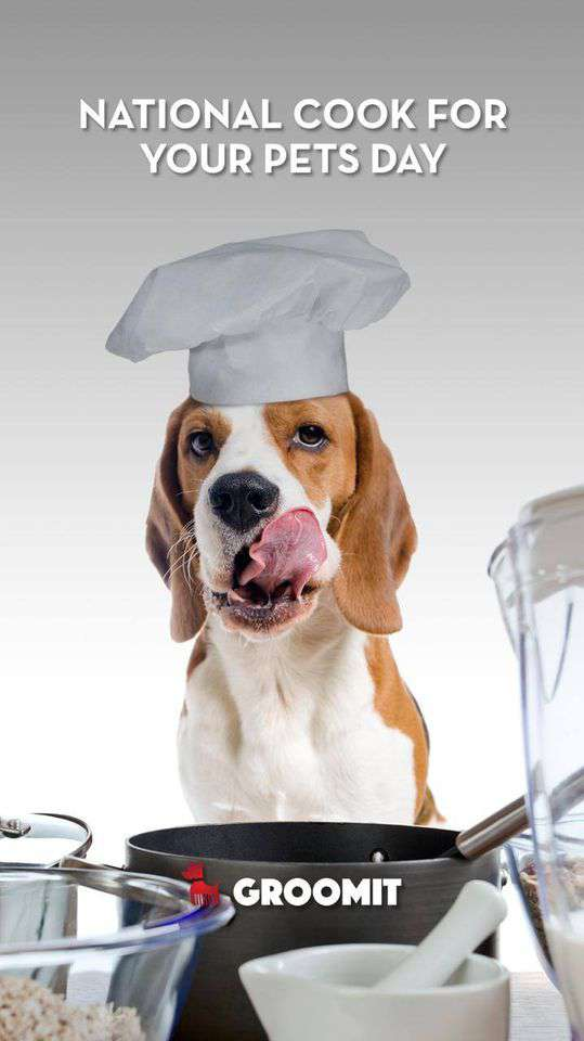 National Cook For Your Pets Day Wishes Unique Image