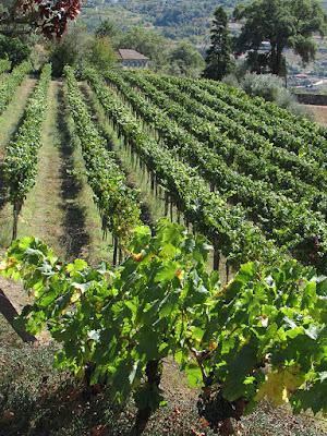 vinhas da Quinta de Covela