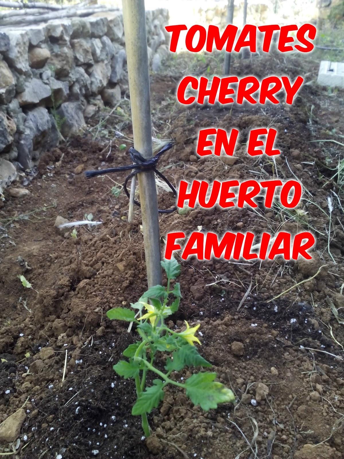origen e historia como multitud de cultivos su origen es merica no se ha fijado un pas en concreto la zona de origen abarca a per ecuador y chile y
