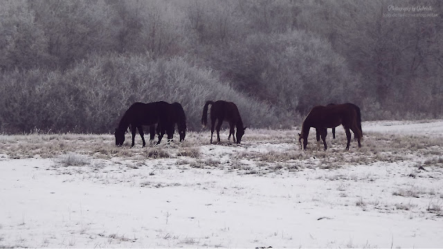 snow nature mudrovce horses winter