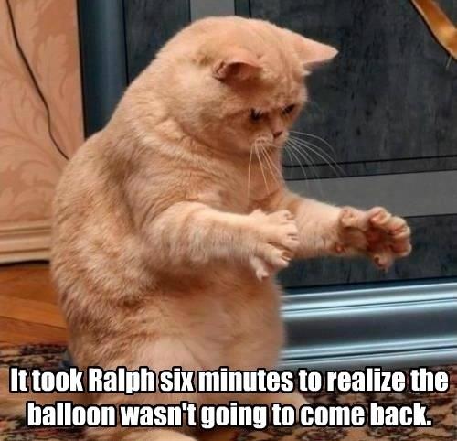 Funny Cat Memes 4