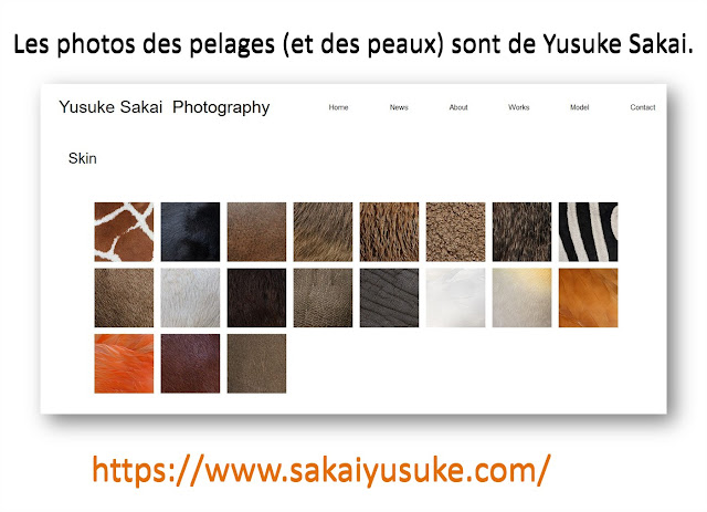Yusuke Sakai