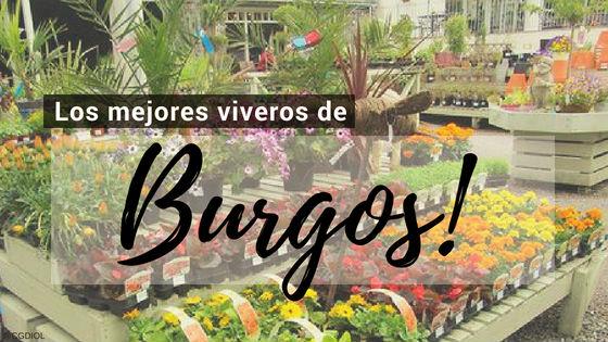 Comprar plantas online en Burgos
