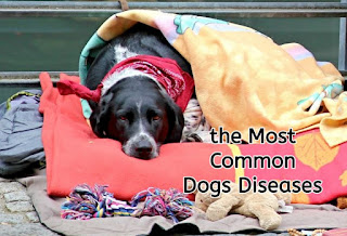 the Most Common Dogs Diseases