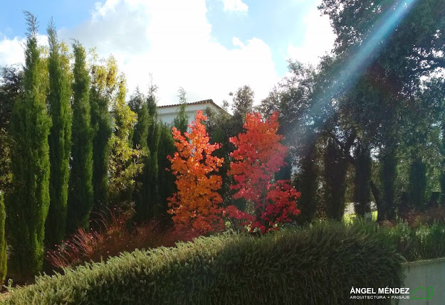 Diseño jardines, proyectos paisajismo, liquidambar, ideas jardines, mejores fotos jardines