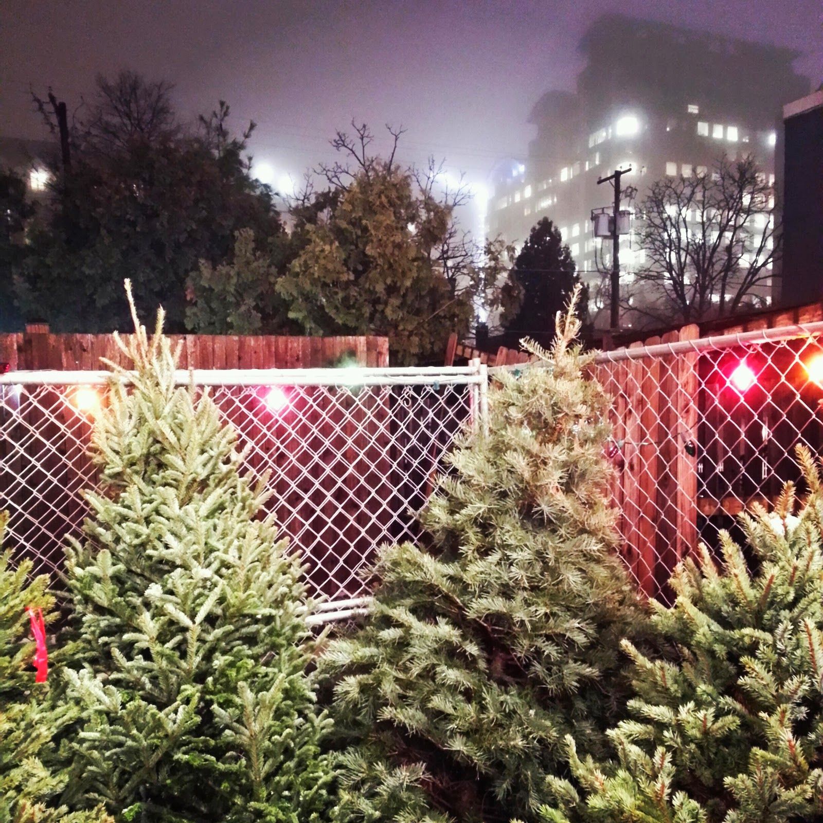 Buy Christmas Tree Seedlings: Robert Dyer @ Bethesda Row: Where To Buy Christmas Trees