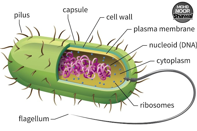 4 Function of Capsule in Bacterial Cell