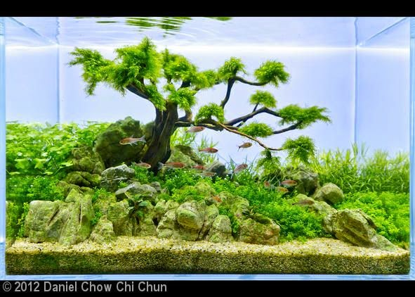 Hồ thủy sinh bon sai cấy rêu - một bố cục rất đẹp