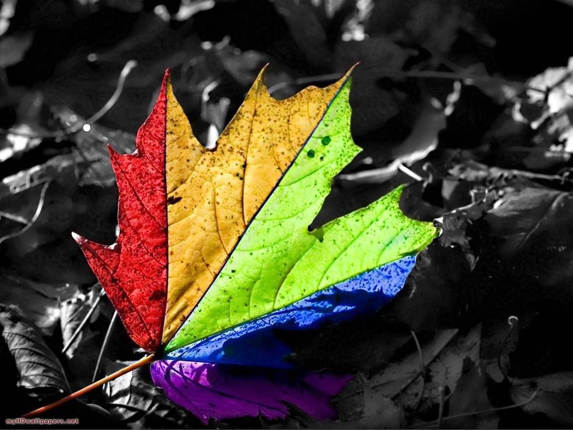 Free Animated Fall Wallpaper Rainbow Wallpapers Desktop Wallpapers