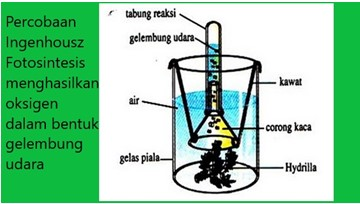 percobaan ingenhousz yang membuktikan fotosintesis menghasilkan oksigen