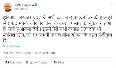 cotton crop loss haryana