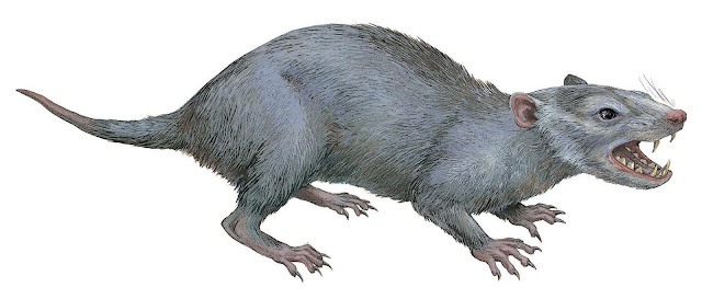 90 million year old tooth unearthed in Japan may provide clues on mammal evolution in Asia