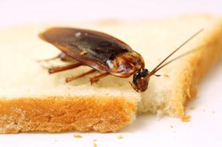 против хлебарки