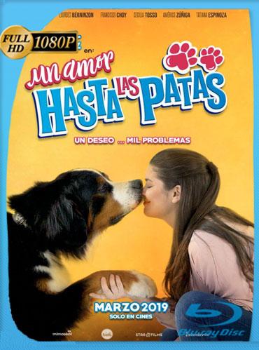 Un Amor Hasta Las Patas (2019) HD 1080p Latino [GoogleDrive] TeslavoHD