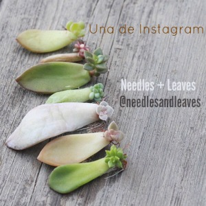 Una cuenta de Instagram: Needles and Leaves