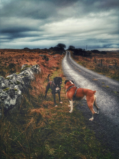 2 boxers on a road to nowhere, Connemara, moody weather