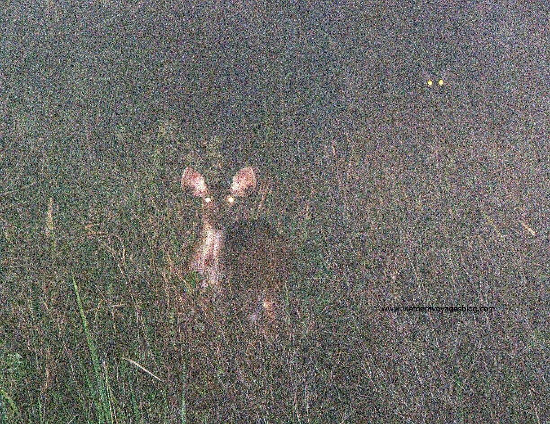 xem thú đêm trong rừng Nam Cát Tiên