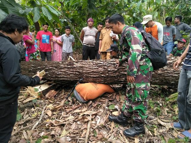 Penebang Kayu di Soppeng Meninggal Usai Tertimpa Pohon Ditebangnya