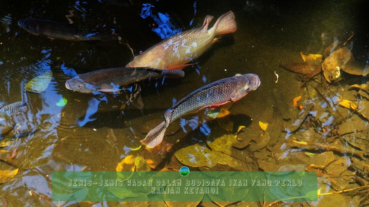 Jenis-Jenis Wadah Dalam Budidaya Ikan