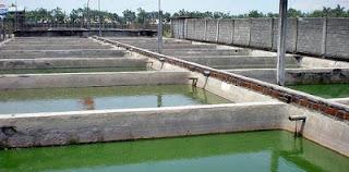 kolam beton ikan gabus