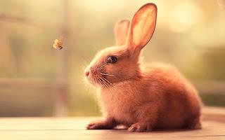 صور ارانب جميلة , احلي صور ارانب كيوت , خلفيات ارانب رائعة
