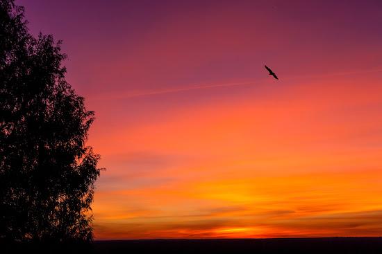 puesta-sol-hoces-buitre