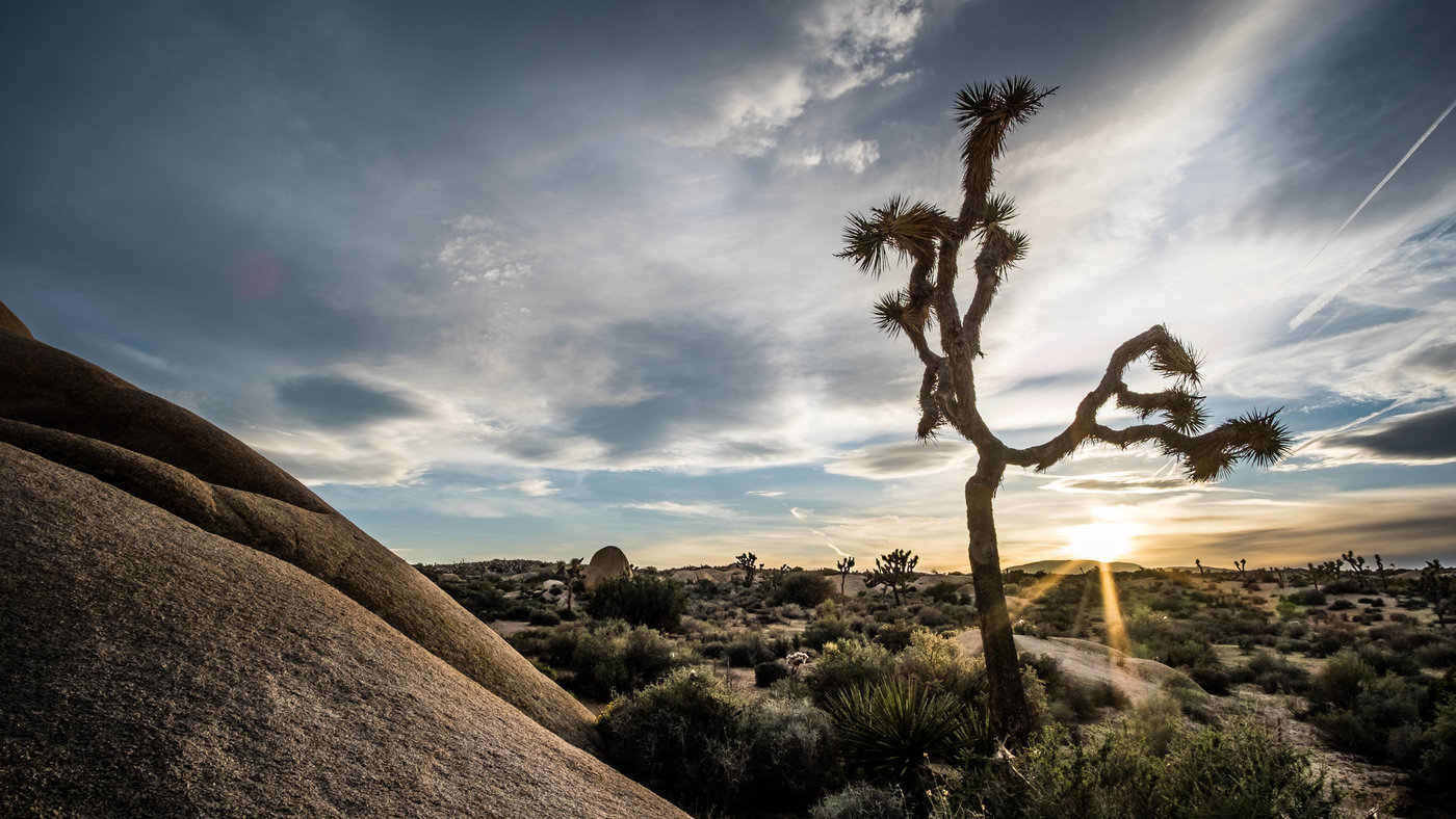 joshua tree national park - 12 stunning national parks in the united states