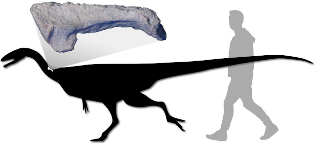 New predatory dinosaur added to Australia's prehistory