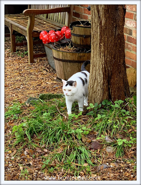Smooch's Courtyard Excursion ©BionicBasil® The Pet Parade 329