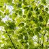 Majowa zieleń
