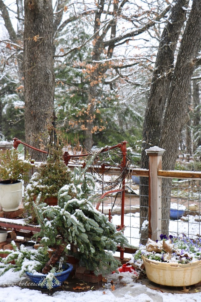 Winter botanicals can be recycled Christmas trees and wreaths