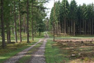 Ein Naturführer mit grüner Weste läuft über einen langen Waldweg