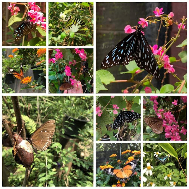 Bai Orchid and Butterfly Farm - BORBOLETAS