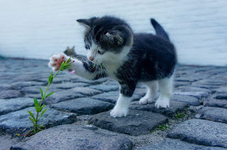 Black and white kitten playing with plant