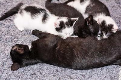قطة مع صغارها