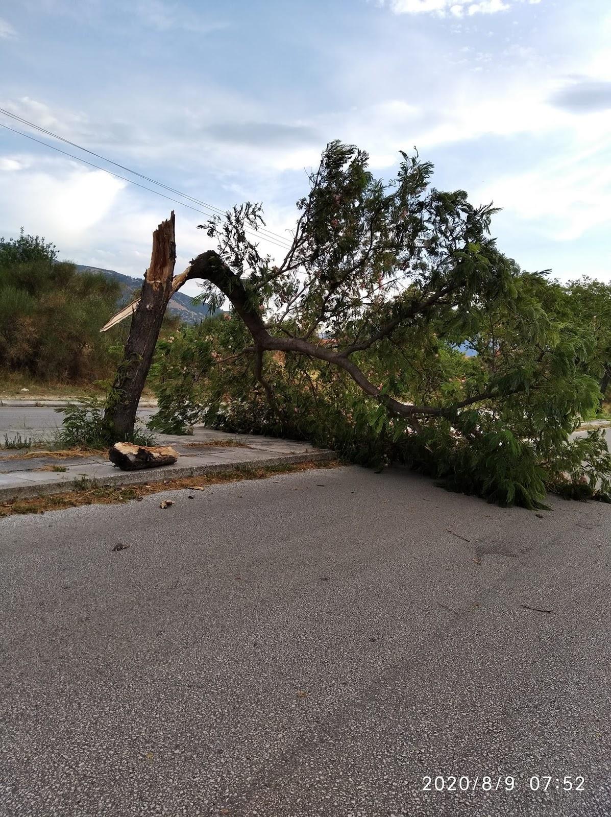 Καιρός: Πτώσεις δέντρων και κλαδιών στην Ξάνθη από θυελλώδεις ανέμους