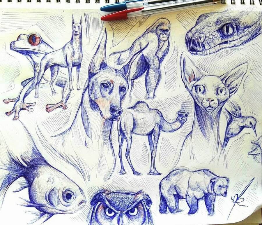 02-Animal-drawing-study-www-designstack-co