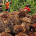 Uni Eropa Resmi Tarik Bea Masuk 18 Persen Atas Sawit Indonesia