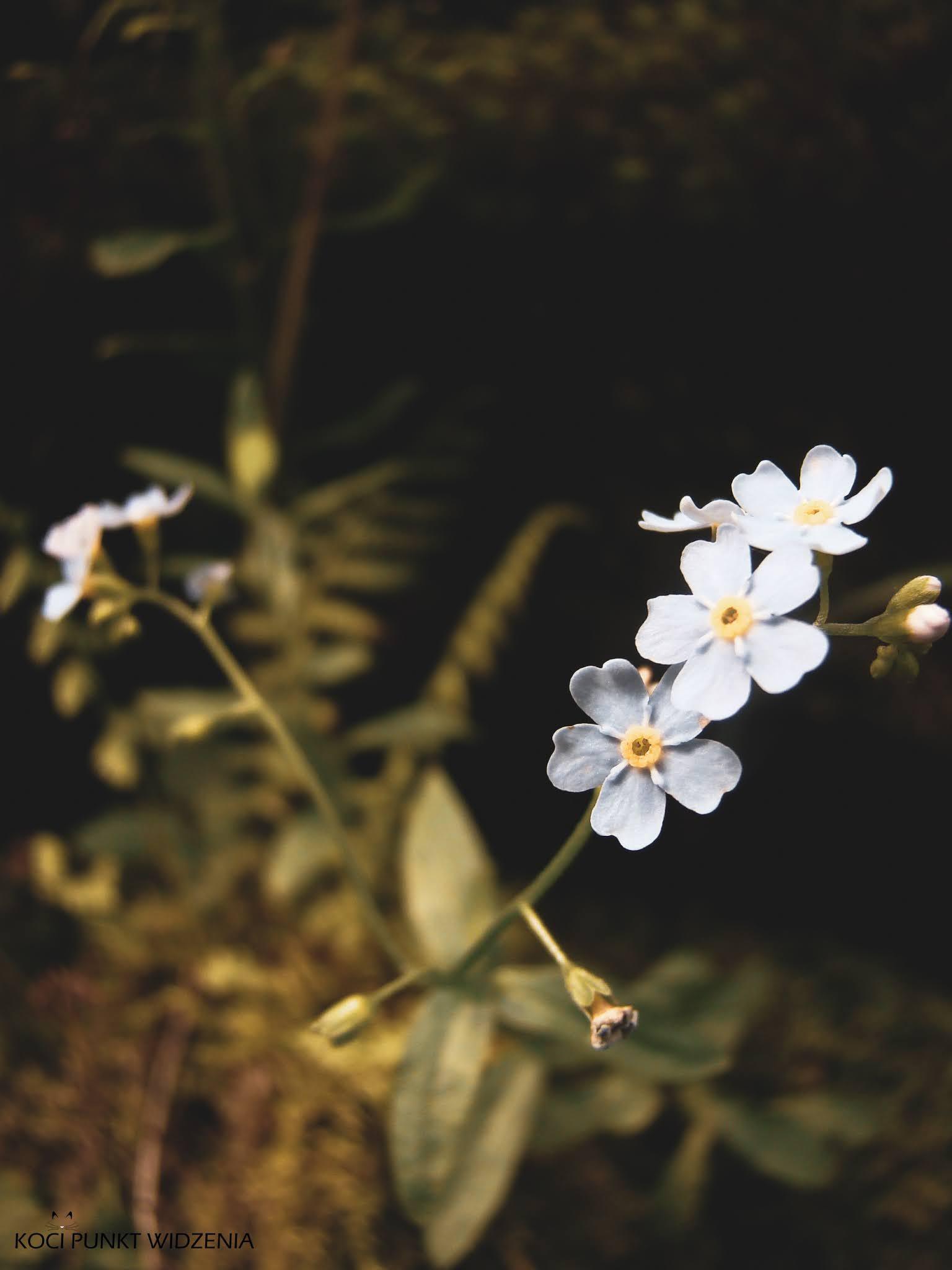 roślinność karkonoszy