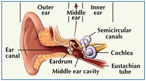Western Fictioneers: IT'S MY EARS, DOC!