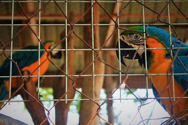Hewan Kakak Tua di Shinka Zoo Tanjung Bajau - Catatan Nizwar ID