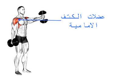 تمارين-تضخيم-عضلات-الكتف