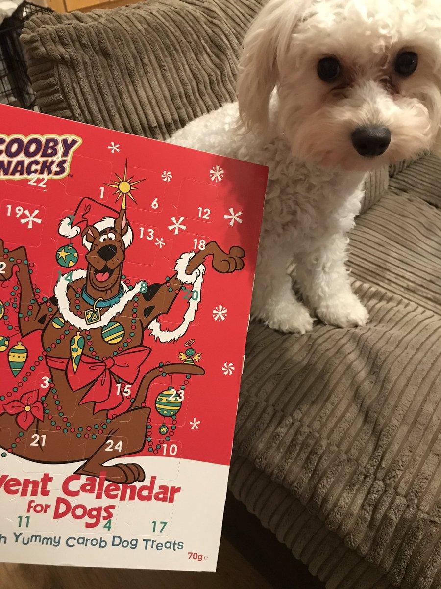 Bear next to his advent calendar