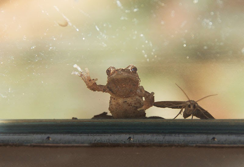 frog and moth at the window