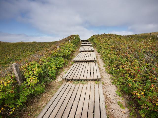 Eine Bohlenweg durch die Dünen