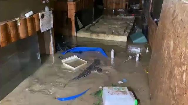 В Ялте осталось 50 крокодилов, выбравшихся на свободу после потопа