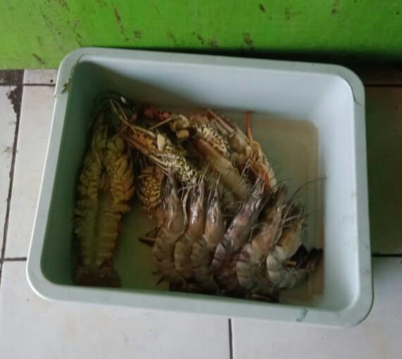 Udang dan Lobster di TPI