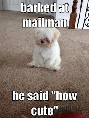 Funny Dog Shaming : I barked at the mailman today #cutedog