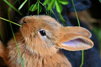bisnis ternak kelinci, usaha ternak kelinci, ternak kelinci, kelinci, biaya modal ternak kelinci, biaya bisnis ternak kelinci, pemasaran ternak kelinci, pemasaran kelinci
